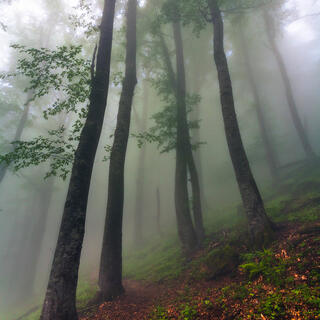 Balkan Mountains, Bulgaria, Копрен